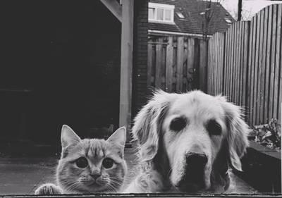 Waarom de hond wél en de kat niet belasten? Dat vinden ze in steeds meer gemeenten!