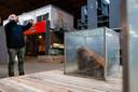 De rottende koe van Martin uit den Bogaard. In gelijkaardige en gelukkig ook geurdichte glazen kisten liggen ook de ingewanden, poten en staart van het dier.