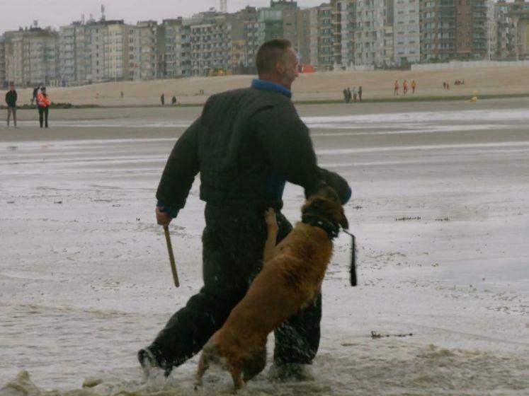 Straffe oefening: de Oostendse politiehonden kunnen hun mannetje staan op zee