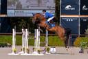 Paardensport in Valkenswaard.