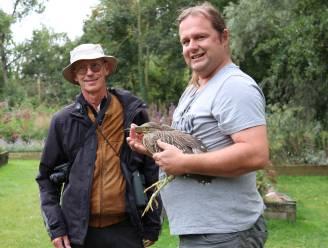Zeldzame kwak raakt verstrikt in visnet aan Donkmeer: vogel verzorgd en dag later opnieuw vrijgelaten