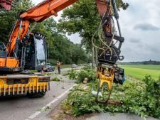 Ophef om kappen 74 bomen tussen Mook en Milsbeek: 'Van de zotte, mensen rijden te hard en daarvoor moet natuur wijken'