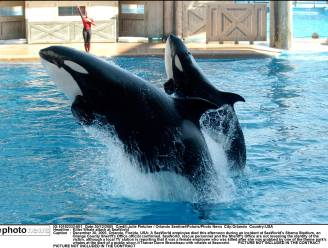 Orkashow in SeaWorld op de helling