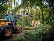 Bomenkap in Roodslag en Personnenbos vanwege essentaksterfte