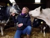 Boerin Ilse brengt kalfjes groot op haar eigen manier