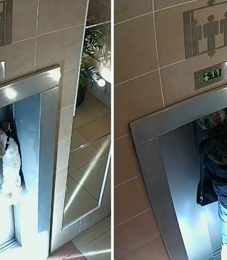 Hondje ternauwernood gered nadat onoplettend baasje lift instapt
