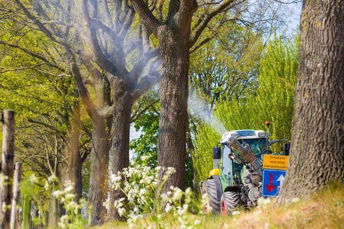 Het bestrijdingsmiddel Xentari wordt, hier in de gemeente Waalwijk, in de bomen gespoten inde strijd tegen de eikenprocessierups.