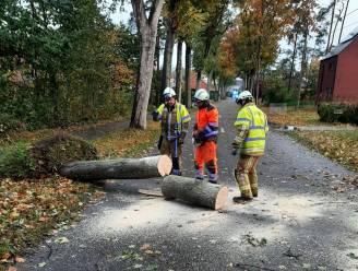Stormweer zorgt voor verkeersproblemen op Molse wegen