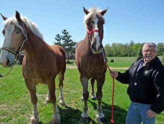 Grootste paard ter wereld is van Belgische afkomst