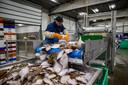 Een man werkt in een visveiling in Zeebrugge.