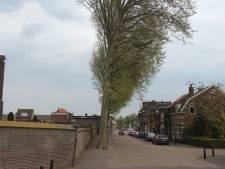 Veelbesproken platanen in Steenbergen blijven staan