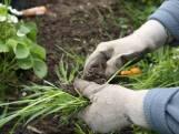 Préparez votre jardin pour l'hiver grâce à ces astuces pratiques de jardinage