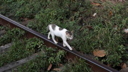 Kat beschuldigd van drugssmokkel ontsnapt uit gevangenis van Sri Lanka