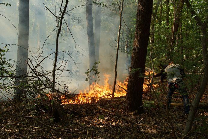 Voorbijgangers probeerden de brand op de bouwgrond van de Efteling te blussen, maar uiteindelijk moest de brandweer worden ingeschakeld.