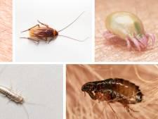Bedwantsen of vlooien? Deze vijf vieze beestjes wil je niet in huis: wat doen ze en hoe pak je ze aan?