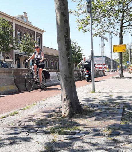 Steen eruit, groen erin: klimaat dwingt tot aanpassing Kanaalweg in Middelburg