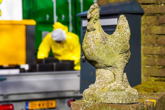 Ruiming pluimveebedrijf Sint-Oedenrode.