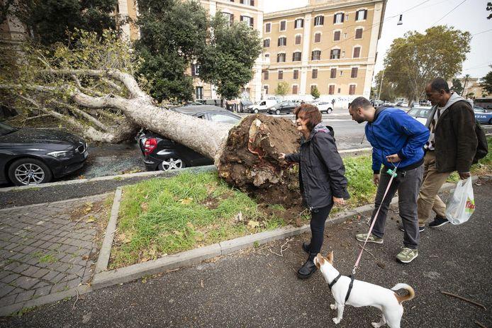 Een ontwortelde boom in Rome.