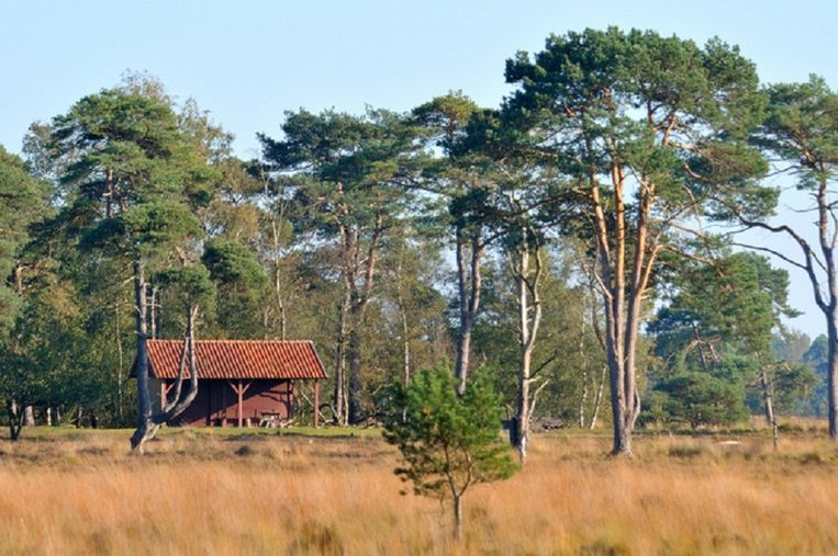 Strijbeekse Heide. Beeld staatsbosbeheer