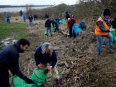 Honderd mensen ruimen puin in Biesbosch: 'Om verdrietig van te worden zoveel wattenstaafjes'