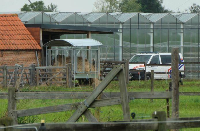 ONZE-LIEVE-VROUW-WAVER - Een ongeziene politiemacht viel vrijdag de tomatenkwekerij binnen.