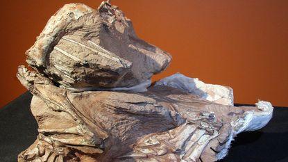 Nieuwe soort plantenetende dinosaurus ontdekt in Utah
