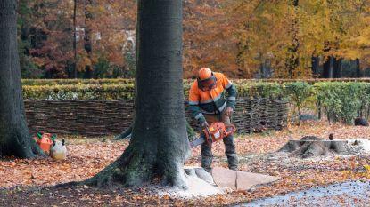"""Helft gekapte bomen niet opnieuw aangeplant: """"Vlaams bosbeleid is een flop"""""""