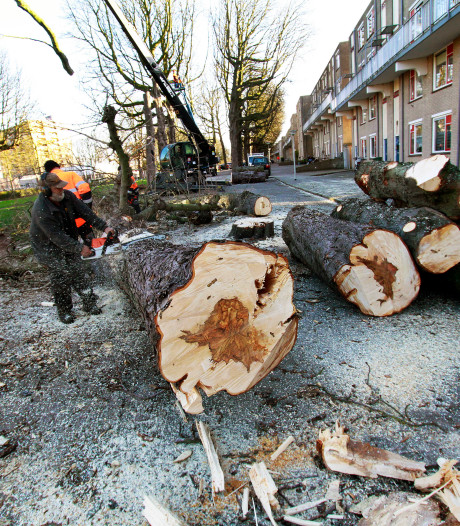 Bomenkap bij Rijtuigweg in Bergen op Zoom op schema