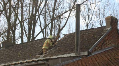 Stormschade in Lede: boom begeeft het en valt dwars door dak