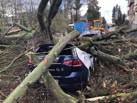 In de Noordstraat in Kontich viel een boom op een auto van rijschool VAB.