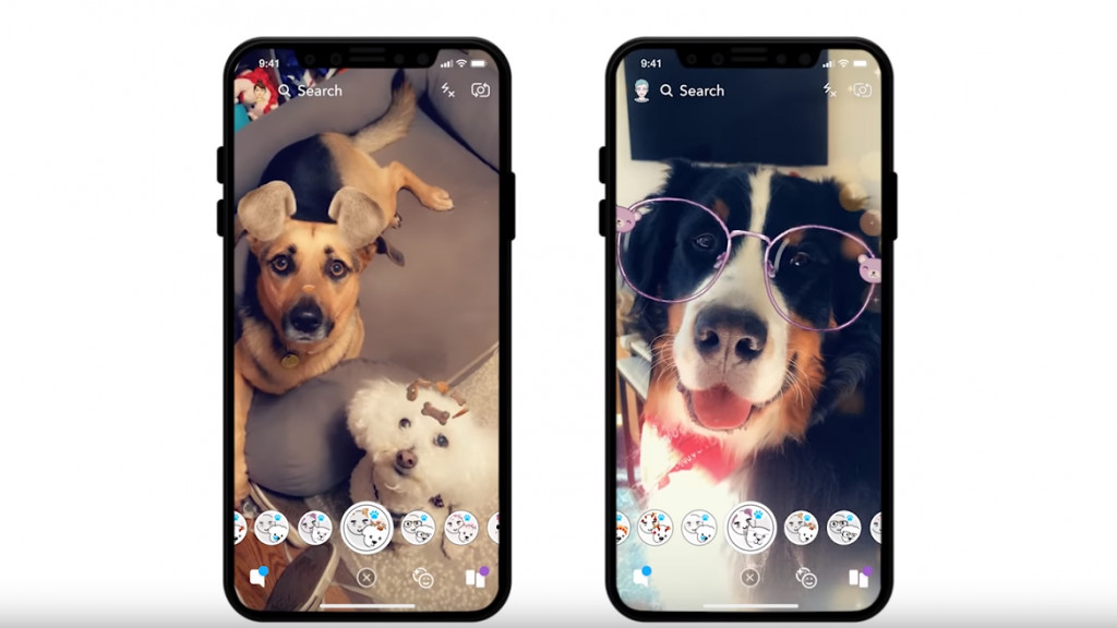 Dog filters