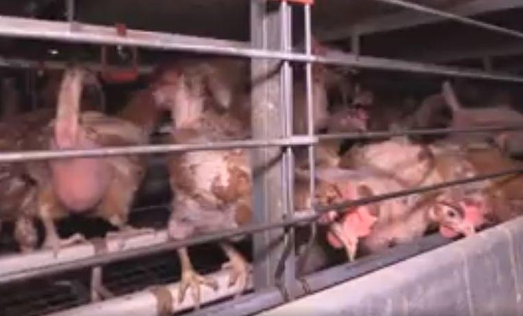 null Beeld Animal Rights