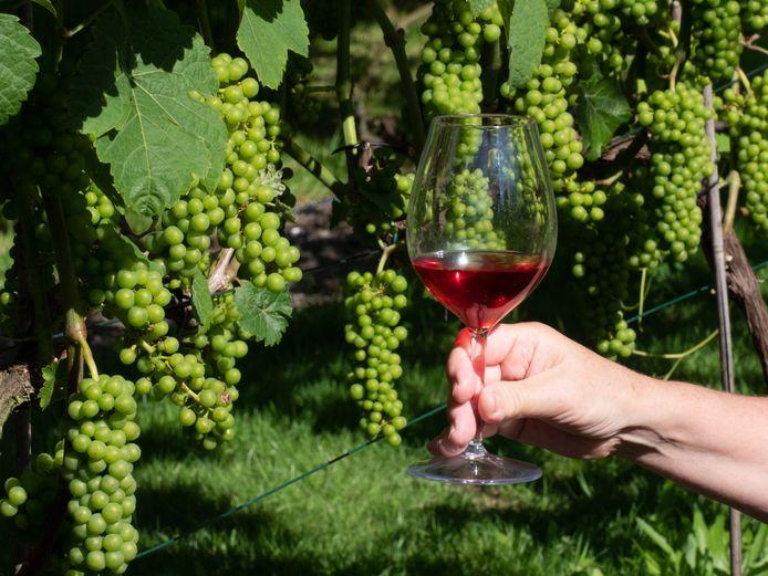 Stockfoto van een wijngaard