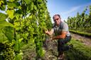 Marino Moenaert leidt je met plezier rond op zijn wijngaard in Moerbrugge.