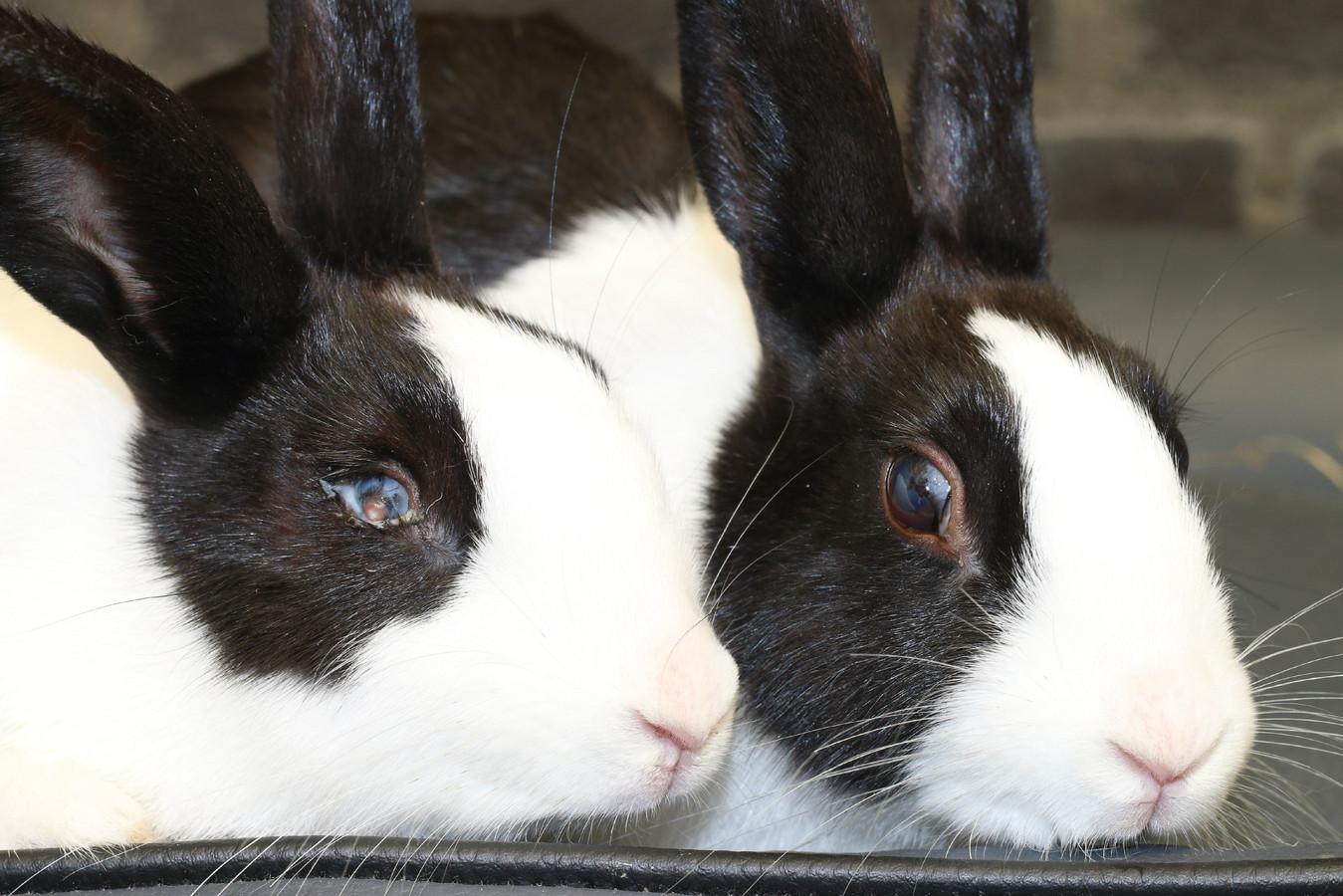 Archieffoto: knaagdieren met een ooginfectie in het dierenasiel. Momenteel worden er volgens het asiel 'schrikbarend veel knaagdieren' binnengebracht.