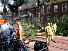 Omgevallen boom Nieuwezijds Voorburgwal zorgt voor problemen tramverkeer