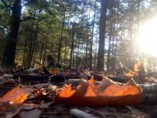 Het oude, moegestreden licht van half september