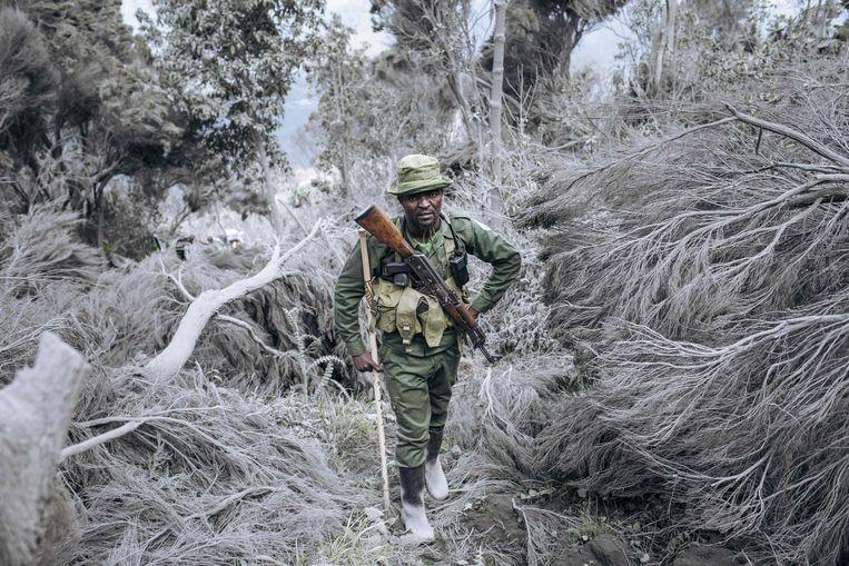 Een boswachter in het Virunga Nationaal Park in de Democratische Republiek Congo beklimt de Nyiragongovulkaan om de activiteit te polsen. De Nyiragongo barstte eind vorige maand uit. Dat kostte dertig mensen het leven, een half miljoen omwonenden werd geëvacueerd.   Beeld AFP