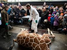 Deense giraffe toch gedood