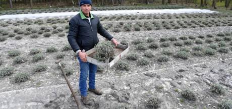 Van lavendelplanten tot een speelbos: op deze Etten-Leurse boerderij is van alles te vinden
