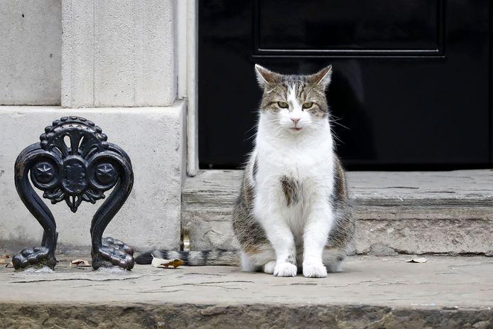 Muizenvanger Larry voor de deur van Downing Street 10, de Britse ambtswoning die hij al tien jaar thuis mag noemen.