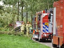 Man (58) overleden door omgewaaide boom in Linschoten