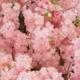 Deze bloemen passen het beste bij jouw sterrenbeeld