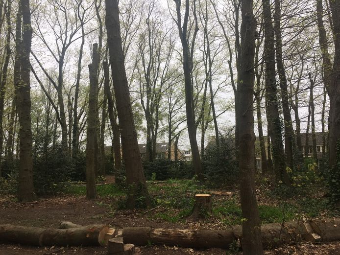 Bos aan de Monseigneur de Haasstraat in Eersel.