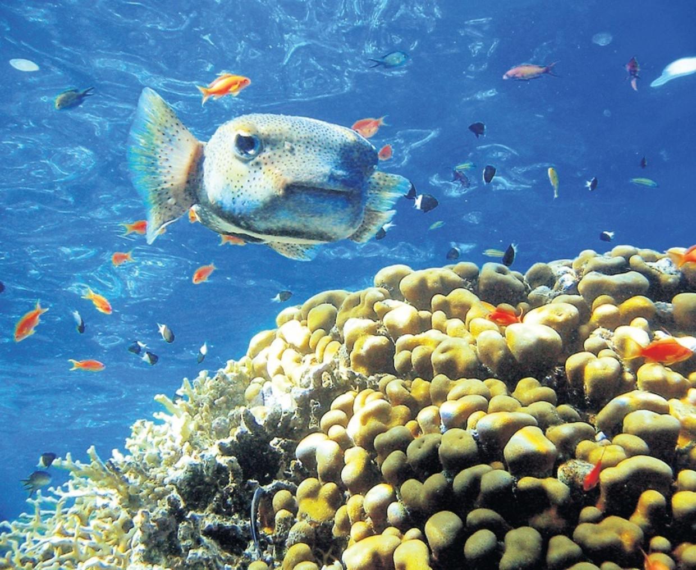 Koraalrif voor de kust van Egypte. Het gros van natuurgebieden is eind deze eeuw verdwenen.
