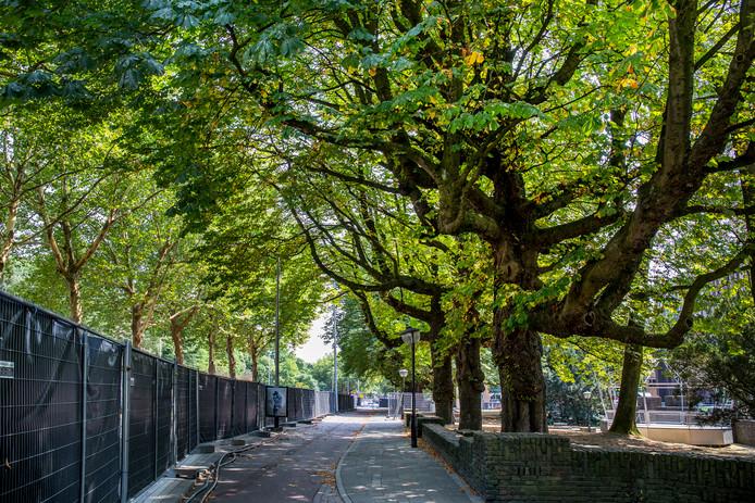 Het afgesloten deel van het Paradeterrein met de grote kastanjebomen.
