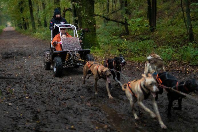 De speciale kar voor sledehonden gebouwd door Arie Verschoor wordt getest in de Drunense Duinen.