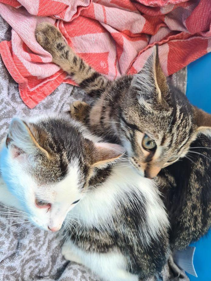 De gevonden kittens