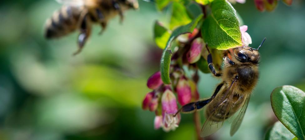 De ASN Bank zet negatieve impact op biodiversiteit als schuld op haar balans
