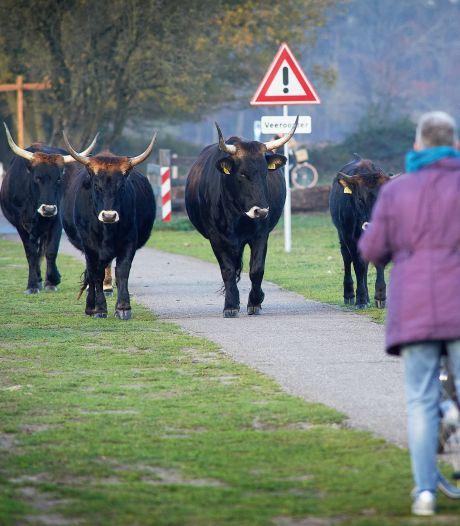 PVV noemt ambtenaren Maashorst onbetrouwbaar